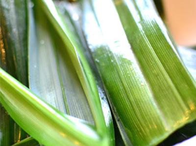 Làm nước ép lá dứa: cho 5 – 6 lá dứa (để lại 1 lá) và 3 thìa canh nước lọc vào máy xay sinh tố rồi xay trong khoảng 1 phút. Sau khi xay, lọc nước qua khăn sạch rồi bỏ bã.