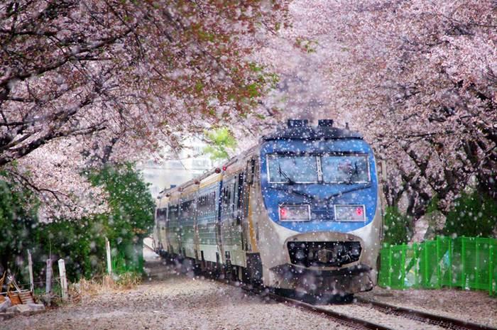 du lịch mùa xuân ở châu Á thường có chi phí rẻ hơn nhiều so với du lịch châu Âu mùa xuân