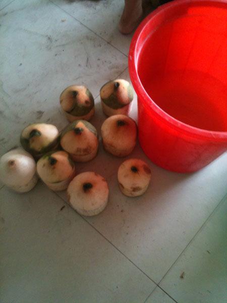 Dừa thâm chuẩn bị được ngâm hóa chất trở thành dừa trắng nõn nà.