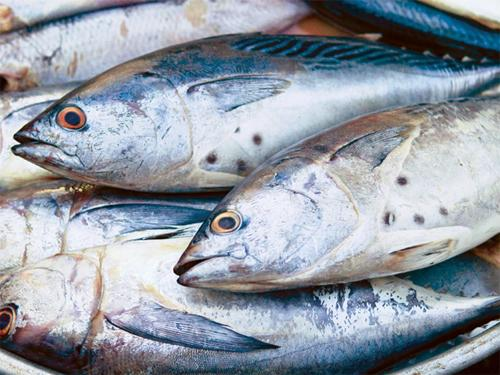 Cần phân biệt cá tươi và cá nhiễm độc để bảo đảm sức khỏe