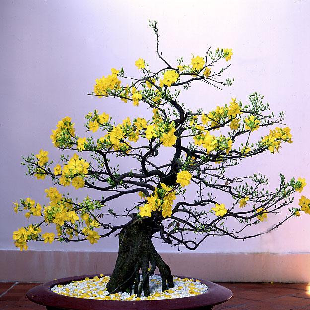 Chọn quà Tết cho bố mẹ chồng là một chậu hoa, cây cảnh rất ý nghĩa
