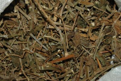 Nhiều người rước họa vào thân vì đắp thuốc nam của thầy lang vườn