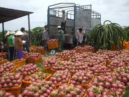 Đã tới lúc nông nghiệp Việt Nam cần mở rộng thị trường đầu ra nông sản