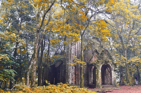Một địa điểm du lịch dịp 2/9 lý tưởng là vườn quốc gia Ba Vì