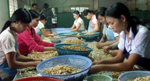 Điều Việt Nam mang những phẩm chất riêng tốt hơn hẳn điều nhập