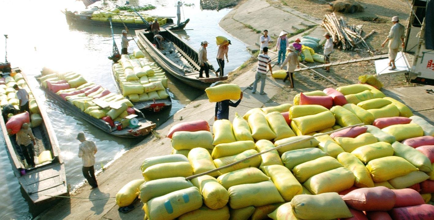 Trung Quốc cấm nhập khẩu gạo Việt Nam ngay lập tức đã có tác động tới giá gạo trong nước