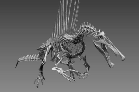 Hóa thạch của loài khủng long khổng lồ Spinosaurus aegytiacus
