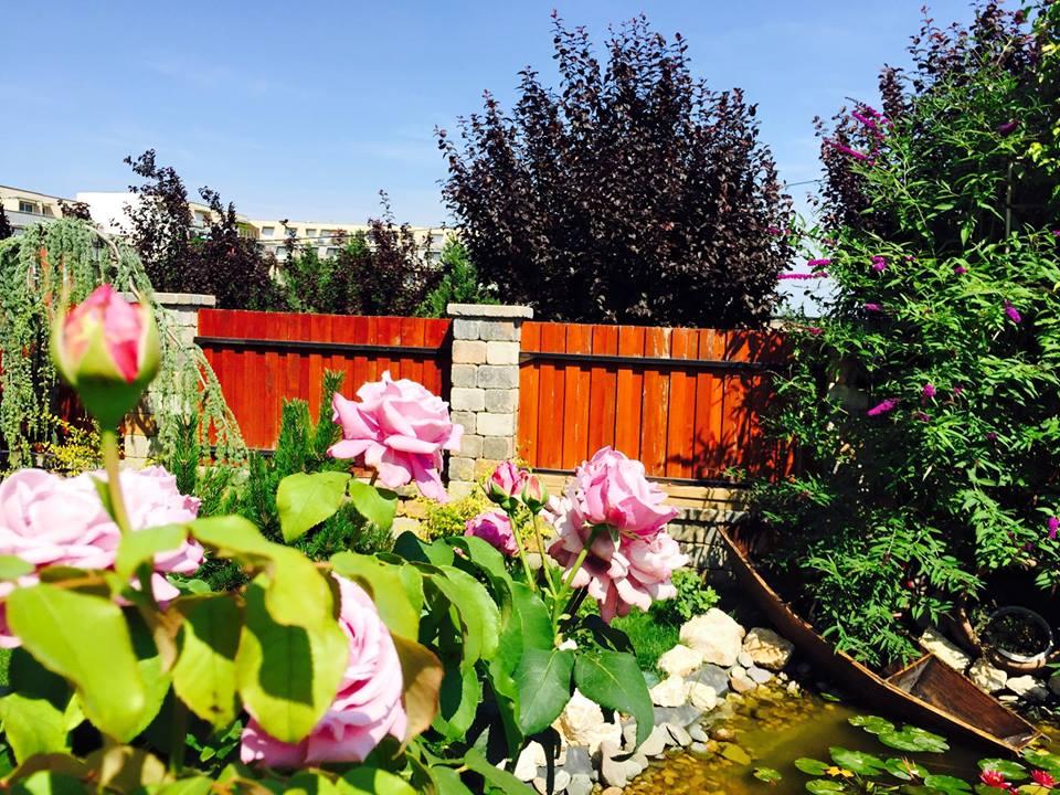 Vườn hoa hồng đẹp như cổ tích của mẹ Việt ở Hungary