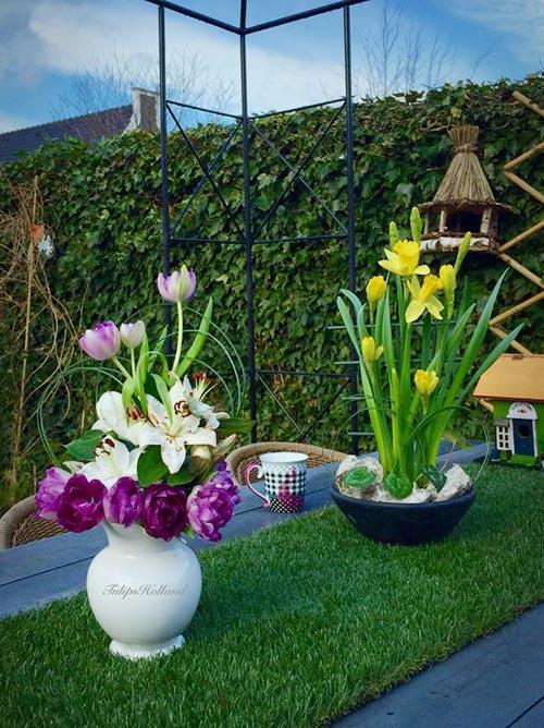 Ngắm khu vườn nhà chị, một trong những loài hoa nhiều nhất, nổi bật nhất là hoa tulips.