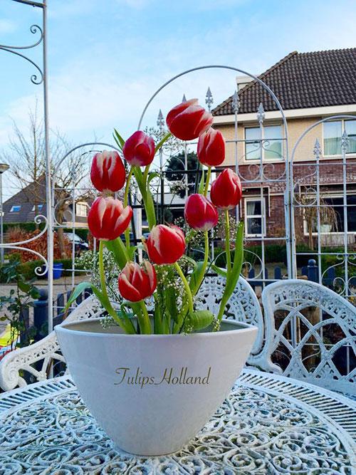 Một trong những bí quyết của chị khi cắm hoa là phải thả hồn vào đó. Ngoài ra, bình hoa cần như ý muốn để cắm được tulips vì loài hoa này khó cắm được đẹp, vì nó giòn