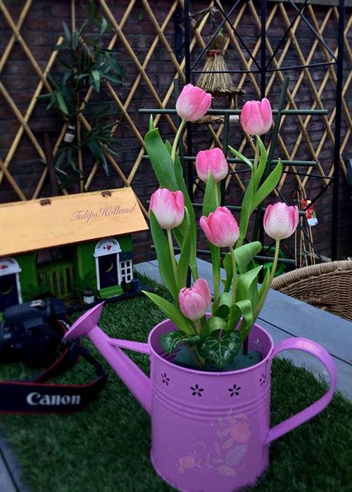 Vào mùa hoa, nhà chị Lips luôn có một bình nhỏ ở góc bếp