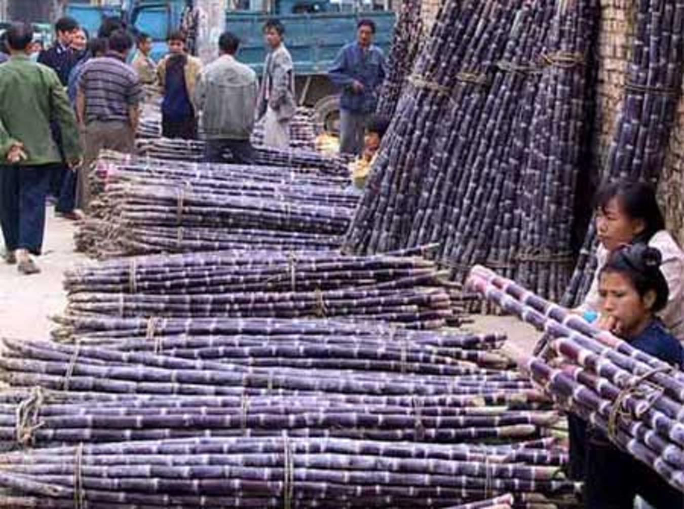 Ông Lộc cho biết giá thành sản xuất mía đường Việt Nam hiện quá cao