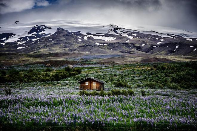 Căn nhà gỗ nhỏ nằm giữa cánh đồng hoa tỏa hương thơm ngát, phía xa là những đỉnh núi phủ tuyết trắng xóa ở Iceland.