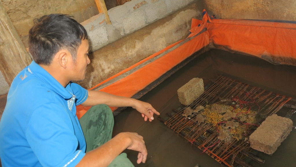 Cư dân Nghệ An và cán bộ địa phương khẳng định họ không nuôi lươn bằng thuốc tránh thai