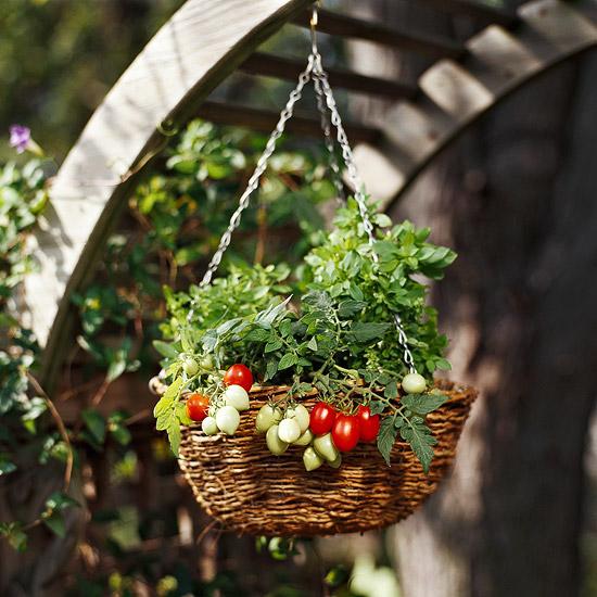 7 loại rau củ dễ trồng tại nhà