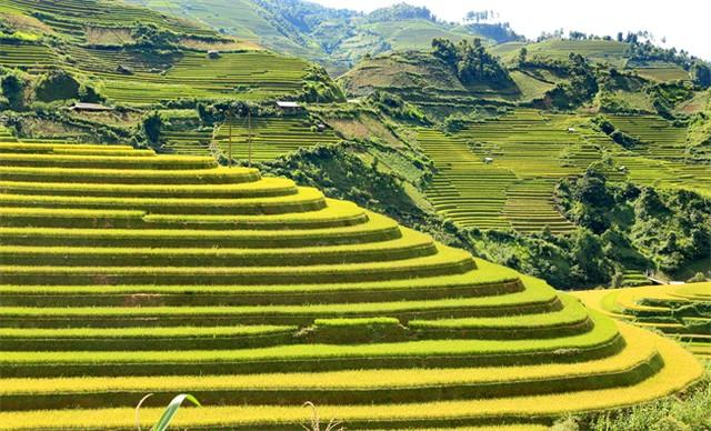 Vẻ đẹp của ruộng bậc thang Mù Cang Chải những ngày này thu hút rất nhiều du khách và các nhiếp ảnh gia trong cả nước tới thưởng ngoạn