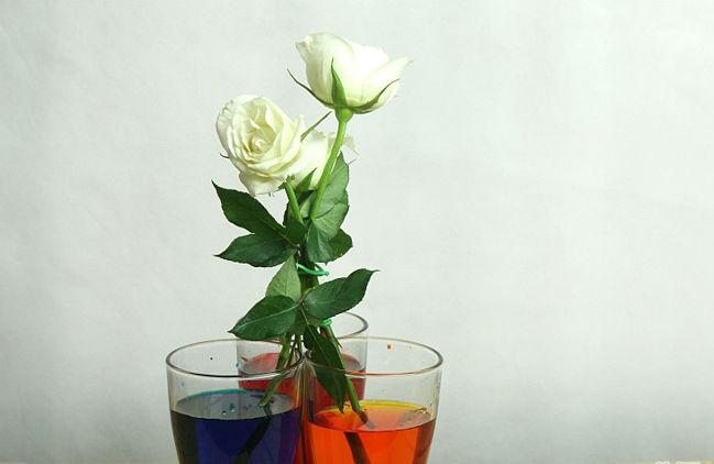 Trang trí nhà đón Tết bằng hoa hồng đa sắc là một sự lựa chọn sáng tạo