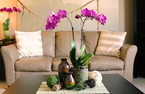 Loài hoa mang dáng vẻ sang trọng này góp phần tô điểm cho không gian sống thêm rực rỡ hơn
