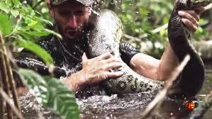 Rosolie tình nguyện 'làm mồi' cho trăn khổng lồ ở Amazon