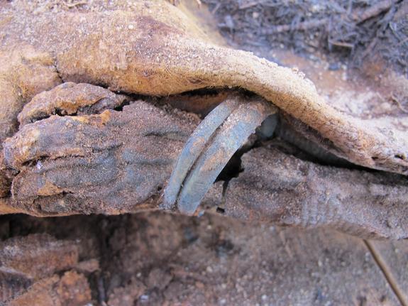 Xác ướp của 1 em bé được tìm thấy tại khu nghĩa trang, nơi chôn cất hơn 1 triệu xác ướp Ai Cập