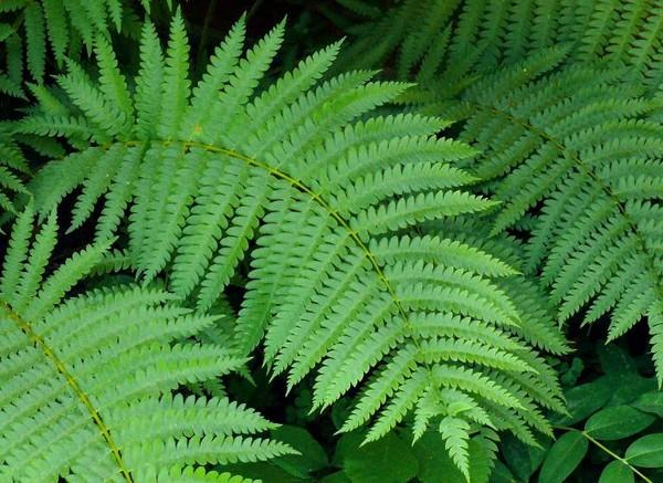 Những loại cây hút khí cực độc nên trồng trong nhà