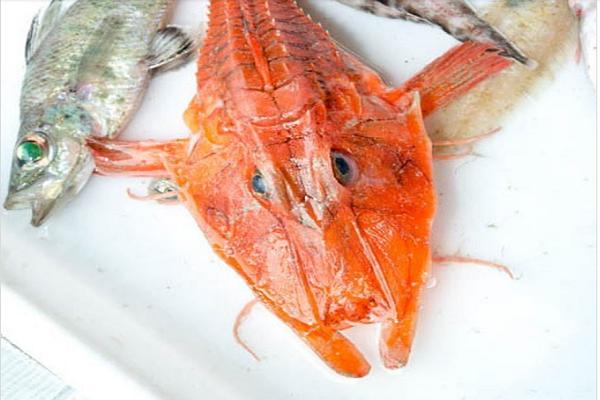 Một số loài cá mới được phát hiện. Ảnh: SJADES 2018.