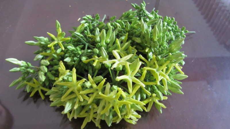 Các nguyên liệu trong cách nấu canh hoa thiên lý rất dễ tìm