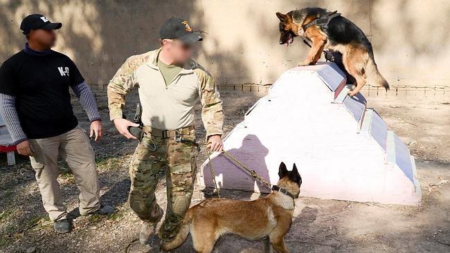 Một buổi huấn luyện chó đặc nhiệm chống khủng bố IS