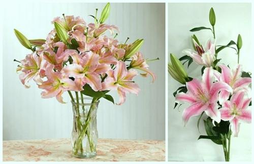 Nên mua và cắm hoa vào bình vào buổi sáng sớm là cách để giữ hoa ly tươi lâu hơn