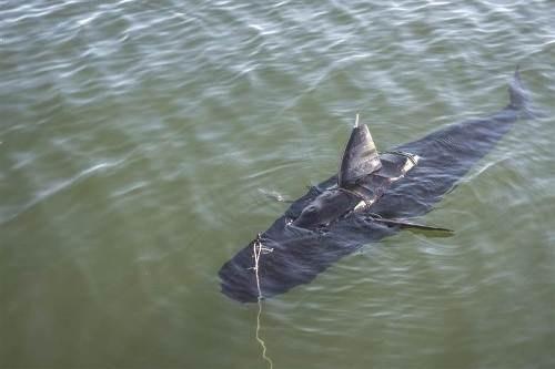 tin tức mới cập nhật 24h ngày 14/12: Cá robot GhostSwimmer của Hải quân Mỹ