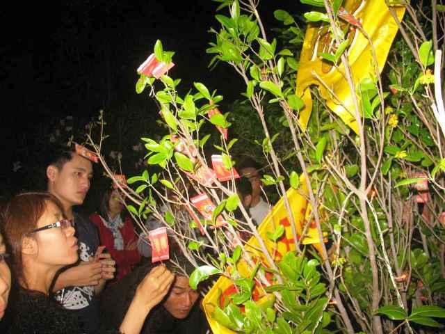 Phong tục ngày Tết Việt Nam với tục hái lộc đầu năm mang lại may mắn, tài lộc cho gia quyến