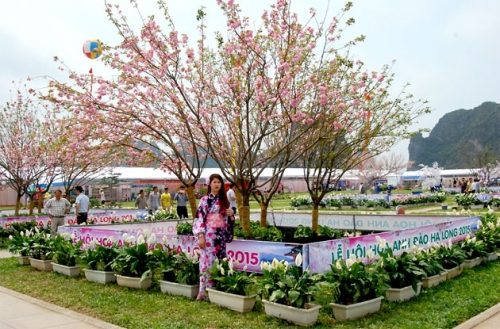 Lễ hội hoa Anh đào Hạ Long là hoạt động thường niên, đây là lần thứ 3 diễn ra ở thành phố này