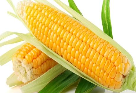 Các sản phẩm biến đổi gen cũng là một trong những thực phẩm gây ung thư