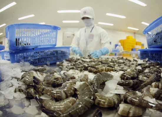 Các sản phẩm tôm đông lạnh nhập khẩu trên thị trường Mỹ được phát hiện là có chứa khuẩn Samonella và E.coli gây hại cho sức khỏe con người