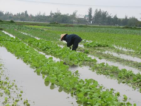 Kỹ thuật phát triển cây trồng dưới lũ, phù hợp điều kiện ở Việt
