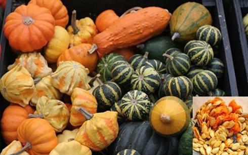 Bí ngô mini được biết đến với tên gọi Pumpkin Casperita, Baby Boo pumpkins hay Miniture Pumkins. Kích thước quả chỉ để vừa lòng bàn tay. Ảnh: báo Zing.vn