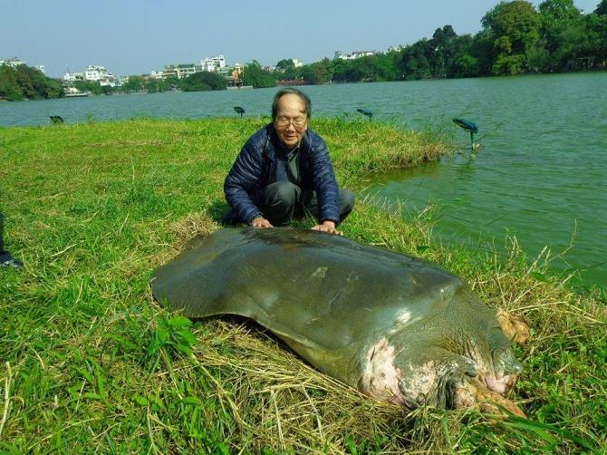 Cụ Rùa Hồ Gươm và những câu chuyện lay động lòng người