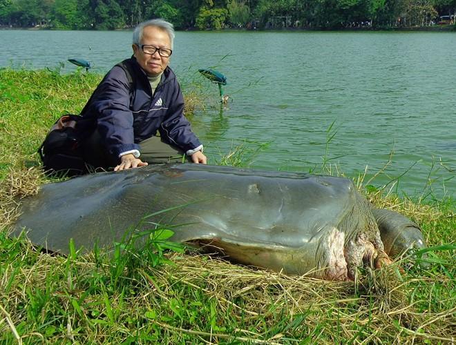 Hình ảnh cụ rùa Hồ Gươm nổi lên giữa làn nước trong xanh sẽ mãi chỉ còn trong ký ức của người dân Thủ đô