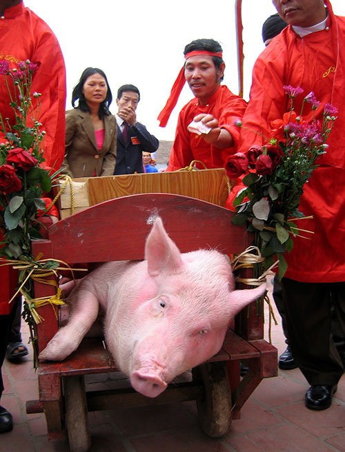 Theo một số ý kiến, lễ hội chém lợn ở Bắc Ninh là lễ hội tàn ác bậc nhất cần được hủy bỏ