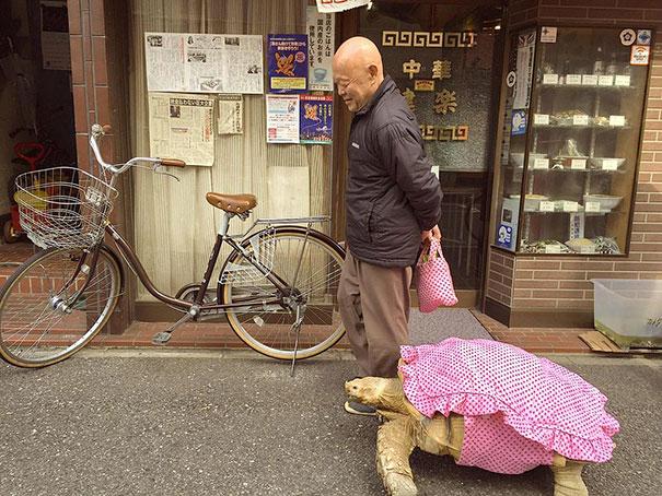 Ông lão dắt thú cưng của mình đi dạo hàng ngày