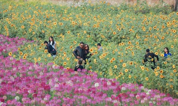 Thung lũng hoa Hồ Tây là địa điểm thu hút khá nhiều giới trẻ Hà Thành