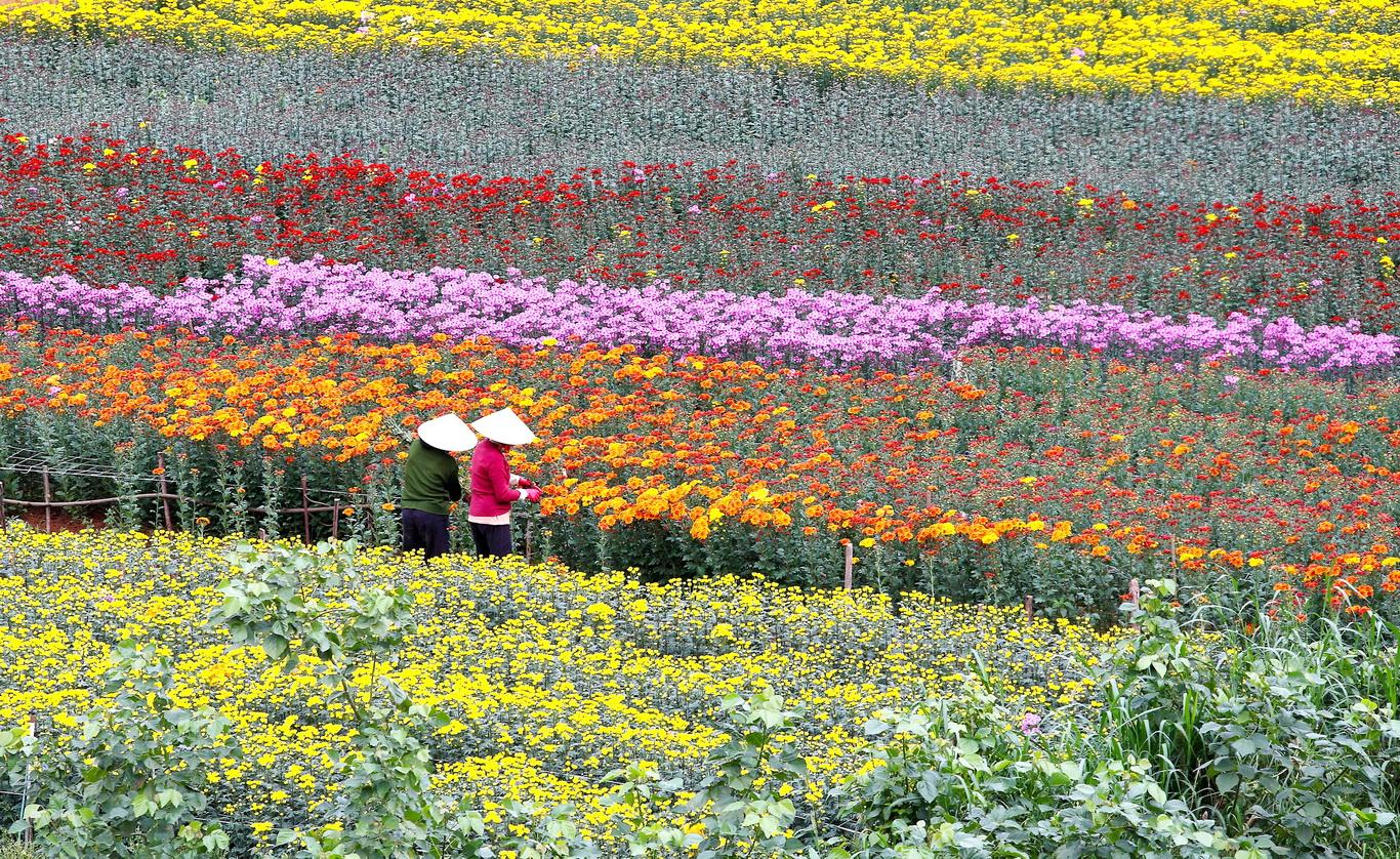 Với sắc hoa rực rỡ, lang hoa Thới Nhựt hứa hẹn sẽ là một địa điểm chụp ảnh Tết Âm lịch vô cùng lý tưởng