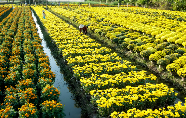 Khung cảnh tuyệt đẹp của làng hoa Mỹ Tho sẽ khiến nơi đây trở thành địa điểm chụp ảnh Tết Âm lịch trên cả tuyệt vời