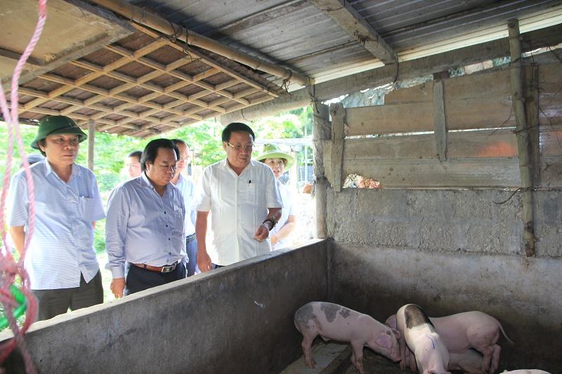 Cơ quan chức năng kiểm tra dịch lợn tai xanh tại Huyện Hải Lăng