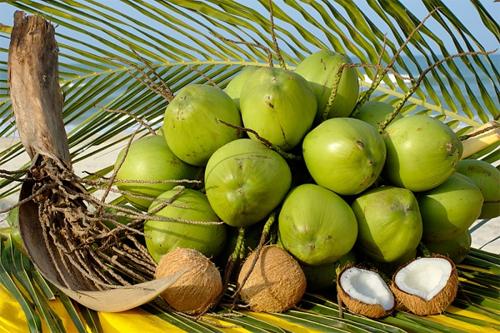 nước dừa luôn được khuyến nghị cho các bà mẹ đang mang thai.
