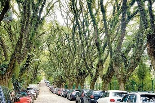 Đường Goncalo de Carvalho, Brazil