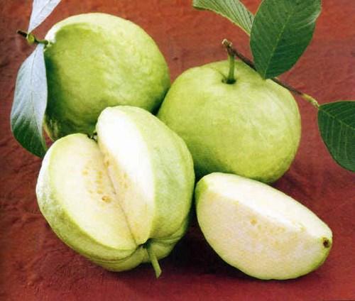 Ổi là loại trái cây dễ gây nhiệt cho cơ thể