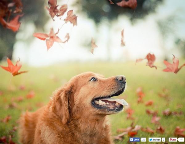 Bộ ảnh hoài niệm về chú chó cưng