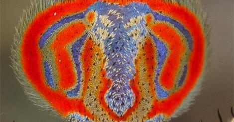 Nhìn kỹ, mọi người sẽ nhận ra chi tiết độc đáo trên lưng loài động vật hoang dã này