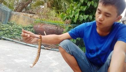 Con rết dài bị tóm gọn tại một gia đình ở Thừa Thiên Huế